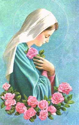 m-roses